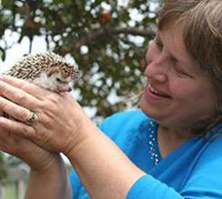 Dawn and Hedgehog